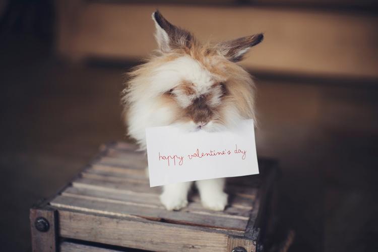あわよくばチョコ!男を惑わす令和時代のバレンタインに新たなチョコ登場!